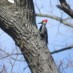 12-15-2012 Christmas Bird Count
