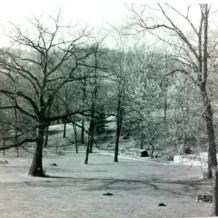 1-19-2013 Winter Tree Identification