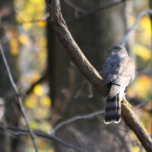 11-4-2012 Fall Bird Walk