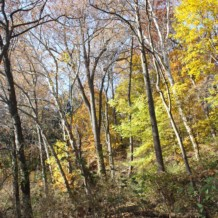 Glen Providence Park Tree List!