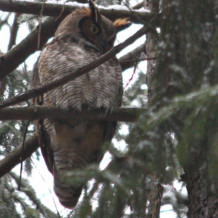 2/5/2012 Winter Bird Walk