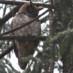 2/5/2012 Winter Bird Walk