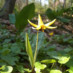 3/17/2012 Spring Ephemerals Walk