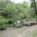 Streamside Buffer Plantings for Earth Day!