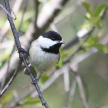 5-7-2016 Spring Bird Walk