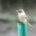 5-6-2017 Spring Bird Walk