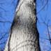 Learning winter tree identification