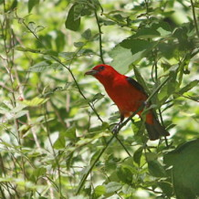 6-2-2013 Late Spring Bird Walk