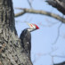 12-14-2013 Christmas Bird Count