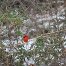 Christmas Bird Count 2013