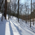 1-26-2014 Winter Tree Walk