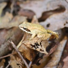 7-11-2015 Herpetology Walk