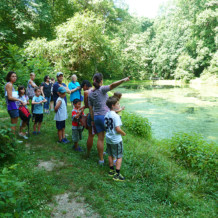 A Pond Walk in Summer