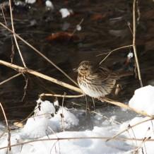 12-20-2014 Christmas Bird Count