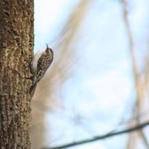 Winter Bird Walk List