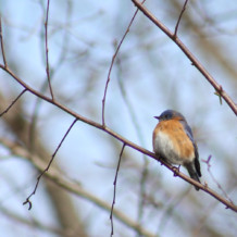 12-19-2015 Christmas Bird Count