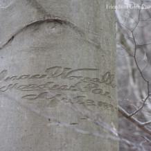 1897 Isaac Worrall Tree Inscription