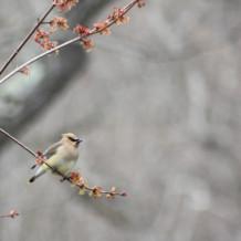 5-5-2018 Spring Bird Walk