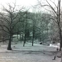 Photo Tribute to the Grand White Oak