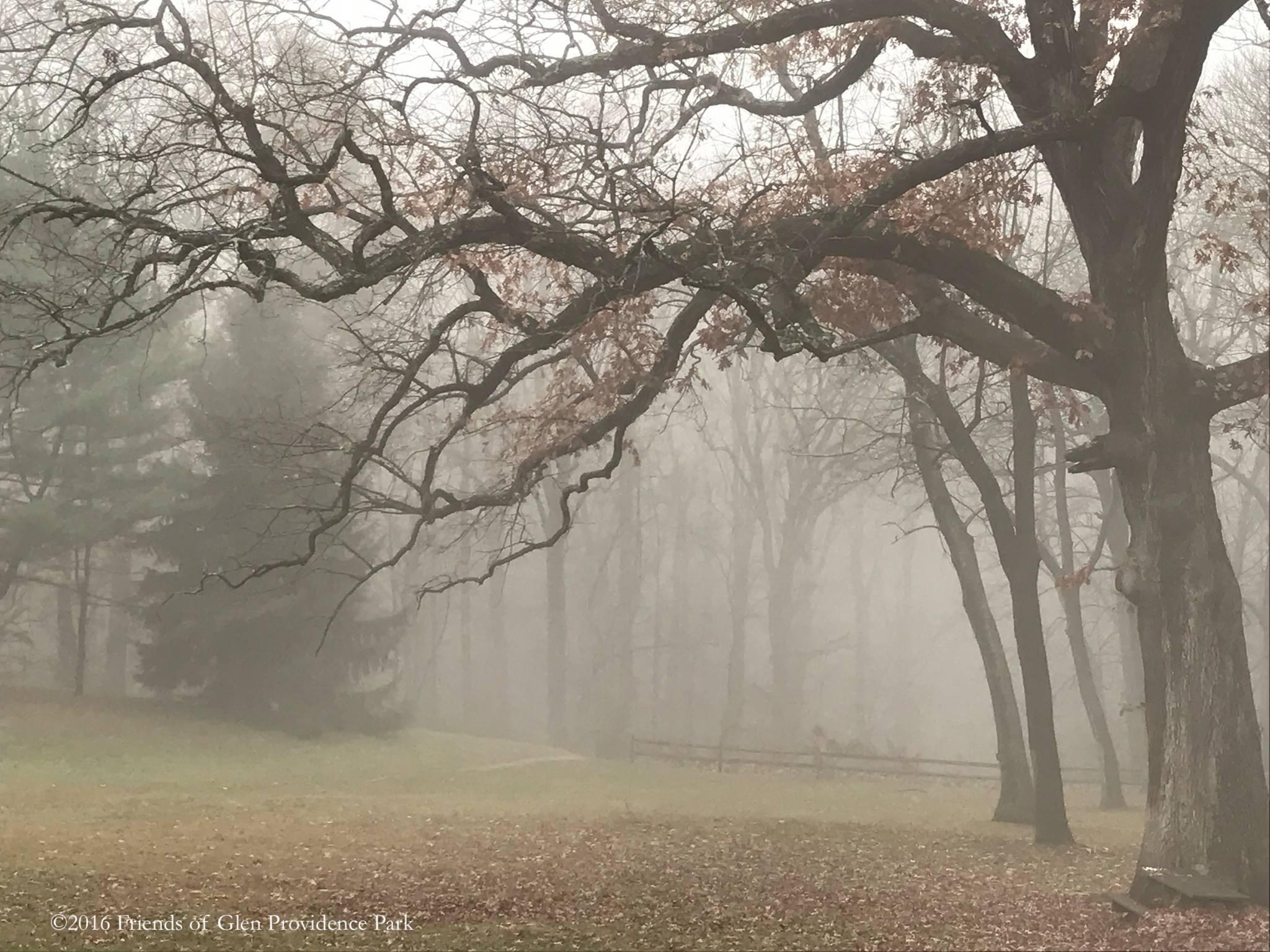 November 2016 -  by Shannon Davidson
