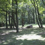 A lovely shaded picnic spot!