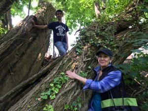 Dan and Marcia marvel at this huge split Osage Orange!
