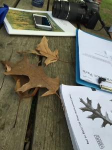 Keys to tree mapping -- tree ID guides, smart phones, and measuring tape.