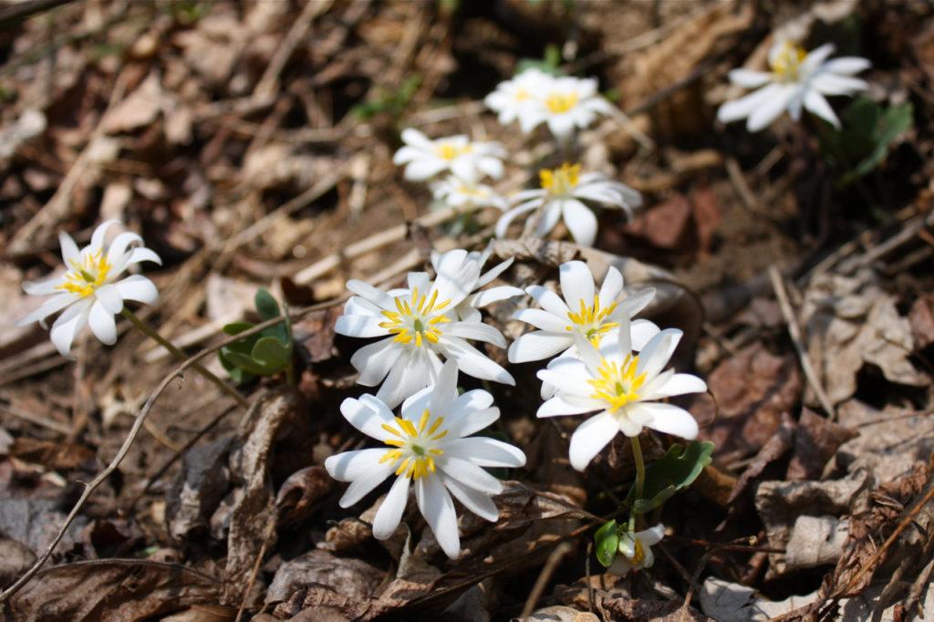 """10 Signs of Spring"" Walk @ Glen Providence Park - main entrance"